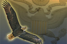 transition_eagles
