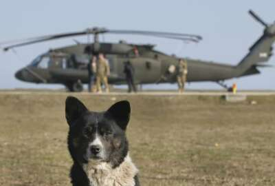 A dog is backdropped by an US Army 2nd Battalion, 10th Regiment, 10th Brigade UH-60 Blackhawk helicopter during a joint US-Romanian air assault exercise at the Mihail Kogalniceanu airbase, eastern Romania, Wednesday, March 8, 2017. Romanian and U.S troops are staging joint exercises with U.S. Black Hawk helicopters, part of the 10th Combat Aviation Brigade nine-month rotational deployment in support of Operation Atlantic Resolve, which aims to reassure NATO's European allies in light of Russia's invasion in Ukraine. (AP Photo/Vadim Ghirda)