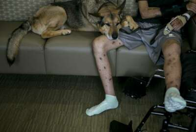 Alex lays down on his owner Army Spc. Alec Alcoser as the pair reunite at Audie L. Murphy Memorial VA Hospital, Friday, Sept. 14, 2018, in San Antonio, Texas. Alcoser was a military dog handler who suffered a traumatic brain injury and his dog lost a leg after they were hit by the blast of a suicide bomber in Afghanistan Aug. 5. Currently, Alcoser is receiving care at the VA's polytrauma unit, while Alex is rehabilitating at Joint Base San Antonio-Lackland.(Josie Norris/The San Antonio Express-News via AP)