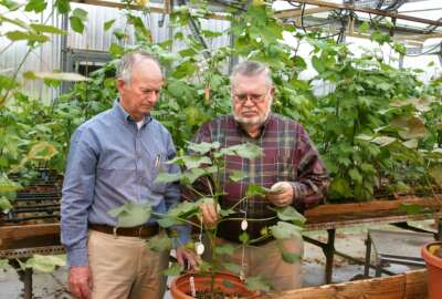 Johnie Jenkins, right, is a scientist at the Agricultural Research Service.