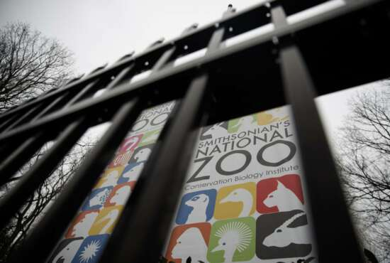 The gate of the closed Smithsonian's National Zoo is seen, Wednesday, Jan. 2, 2019, in Washington. Smithsonian's National Zoo due to the partial government shutdown. President Donald Trump is convening a border security briefing Wednesday for Democratic and Republican congressional leaders as a partial government shutdown over his demand for border wall funding entered its 12th day. (AP Photo/Carolyn Kaster)