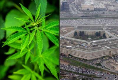 marijuana pentagon Defense Department DoD pot security clearance