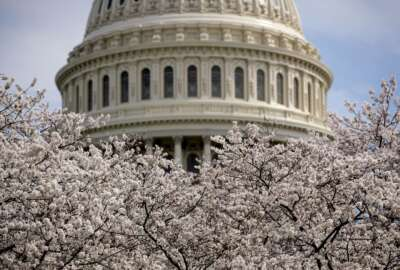 FILE- In this March 30, 2019, file photo the Dome of the U.S. Capitol Building is visible as cherry blossom trees bloom on the West Lawn in Washington. On Wednesday, April 10, the Treasury Department releases federal budget data for March. (AP Photo/Andrew Harnik, File)