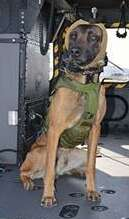military dog, army, helicopter