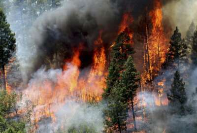 FILE - In this June 11, 2018, file photo, flames consume trees during a burnout operation that was performed south of County Road 202 near Durango, Colo. A report by the U.S. Geological Survey shows investments made to reduce the risk of wildfire in forested areas are paying dividends when it comes to creating jobs and infusing money in local economies. The study focused on several counties along the New Mexico-Colorado border that make up the watershed of the Rio Grande. (Jerry McBride/The Durango Herald via AP, File)