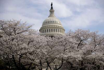 """FILE - In this March 30, 2019, file photo the Dome of the U.S. Capitol Building is visible as cherry blossom trees bloom on the West Lawn in Washington. Washington health officials recommended on Wednesday, March 11, 2020, that all """"non-essential mass gatherings, including conferences and conventions,"""" be postponed or canceled through the end of March, a move that could imperil the popular Cherry Blossom Festival. (AP Photo/Andrew Harnik)"""
